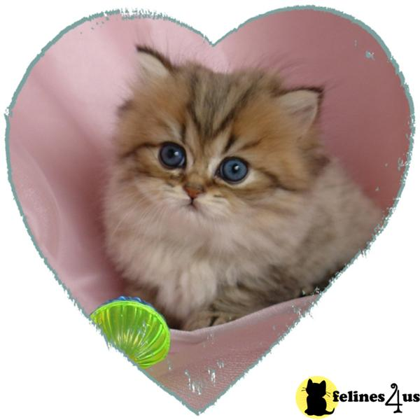 Care Bear Kittens Picture 2