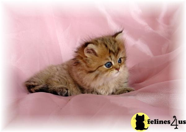Care Bear Kittens Picture 3