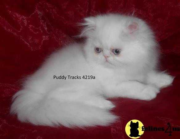 Puddy Tracks Picture 1
