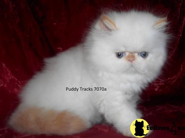 Puddy Tracks Picture 2