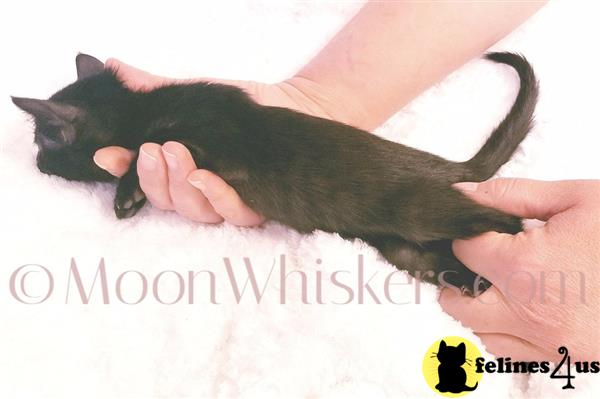 MoonWhiskers Picture 2