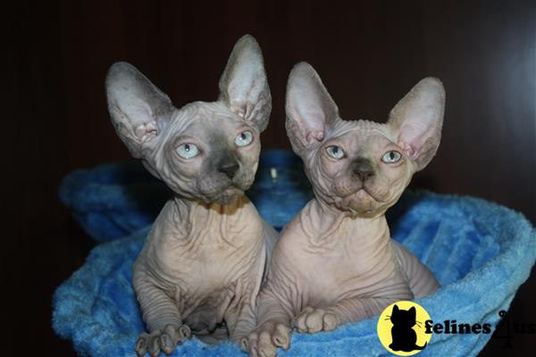 Sphynxtime89 Picture 2