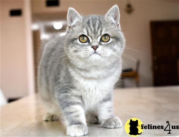 thechubbyfacedcat Picture 1