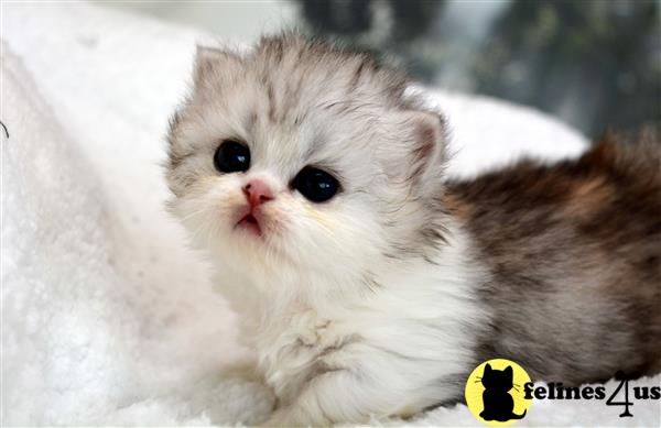 thechubbyfacedcat Picture 2