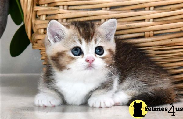 thechubbyfacedcat Picture 3