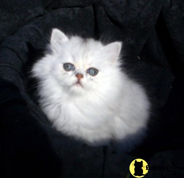 crystalpurrs Picture 3