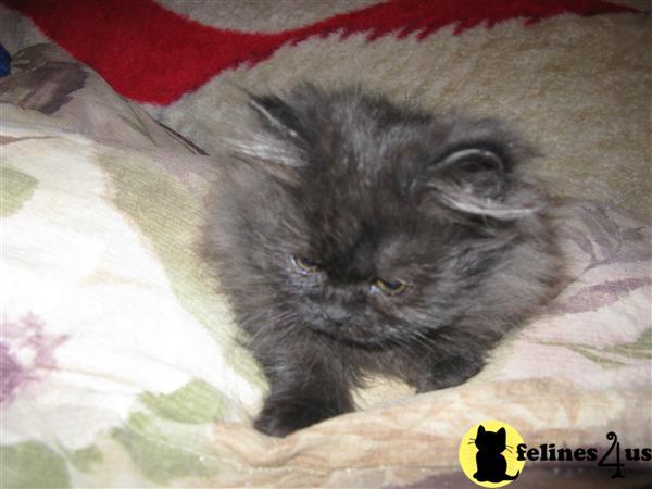 2003 arctic cat f7