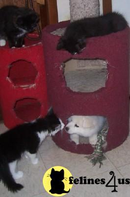 cat litter for oil spills