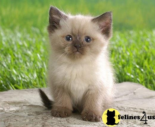 pictures of really cute cats