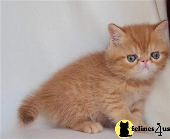 kitten madison wi