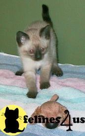 diy feral cat shelter