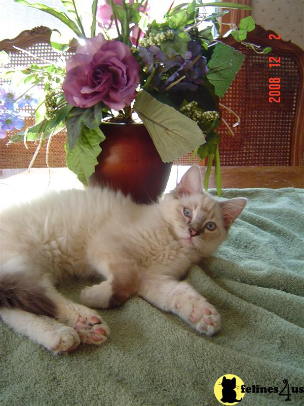 Kittens for Sale in New Jersey