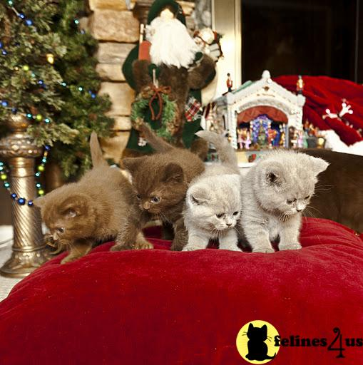 Kittens for Sale in Ohio