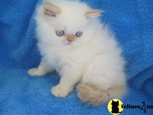 free kittens nj craigslist