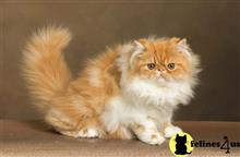 Kittens for Sale in New Hampshire