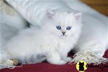 Kittens for Sale in Washington