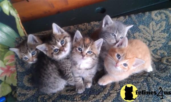 free kittens for sale on ebay