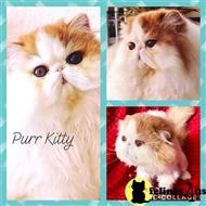 persian cat posted by PurrKitty