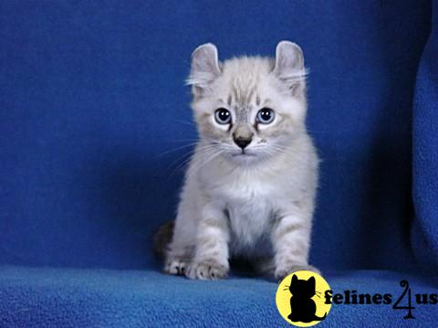 Kittens for Sale in Idaho