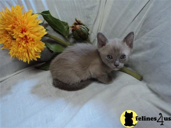 Cat Adoption Salina Ks