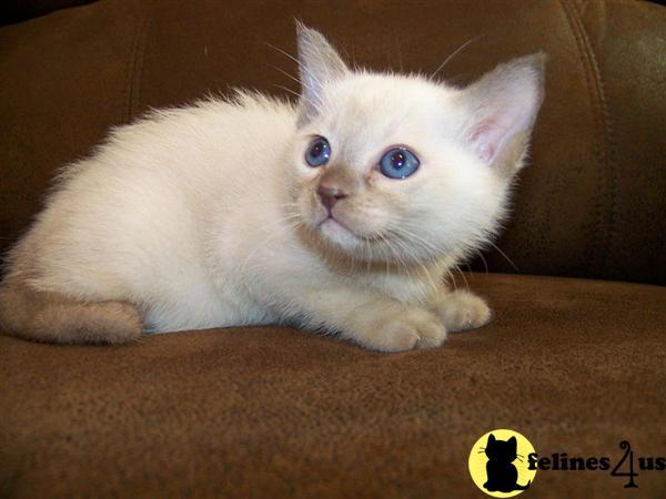 abandoned kittens care